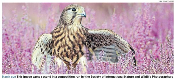 The Times - SINWP 2018 Bird Photographer of the Year