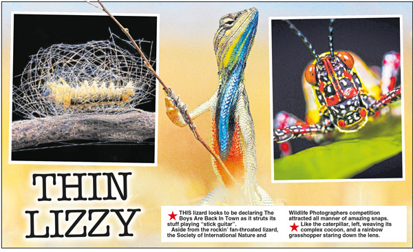 DAILY STAR - Nature's Surprises