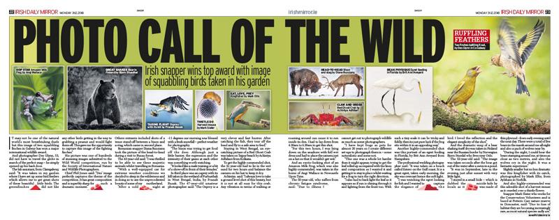 Irish Daily Mirror - Wild World